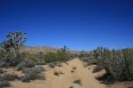 Juniper Flats Road, Joshua Tree National Park