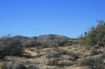 Quail Mountain, Joshua Tree National Park
