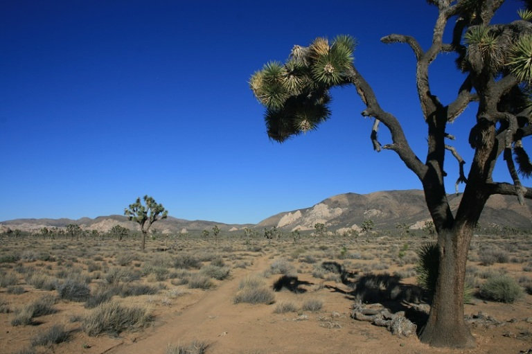 California Riding & Hiking Trail, Joshua Tree National Park