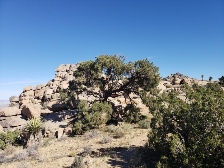 North View Trail, Joshua Tree National Park