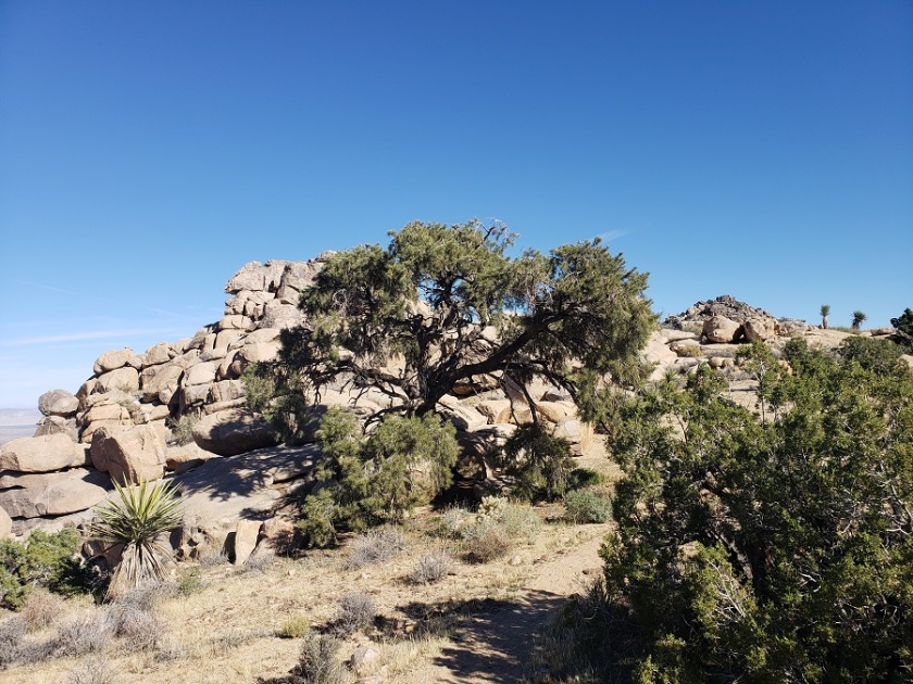 North View Trail, Joshua Tree National Park