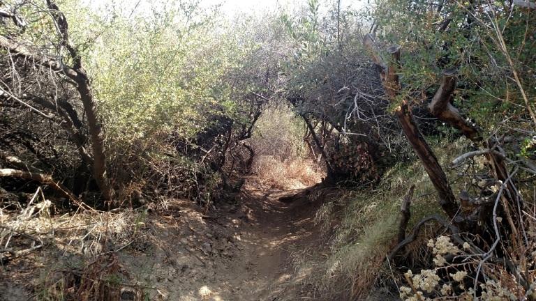 Claire's Spur Trail, Los Angeles, CA