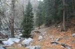 San Gabriel Mountains, San Bernardino National Forest, CA