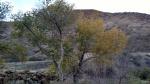 Grasshoper Canyon, Castaic Lake, CA