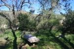 Martha's Grove, Poway, CA