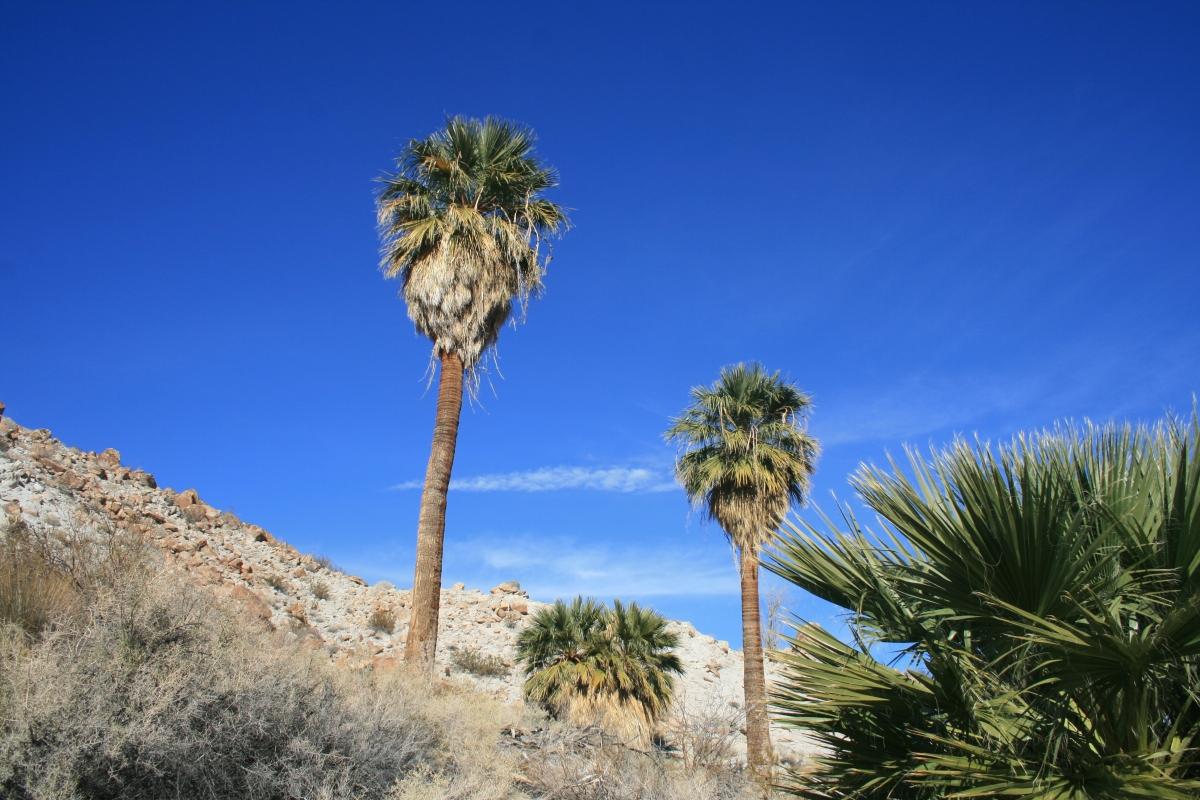 mountain palm springs  anza borrego desert state park   u2013 nobody hikes in la