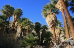 Palm Bowl Grove, Mountain Palm Springs, CA