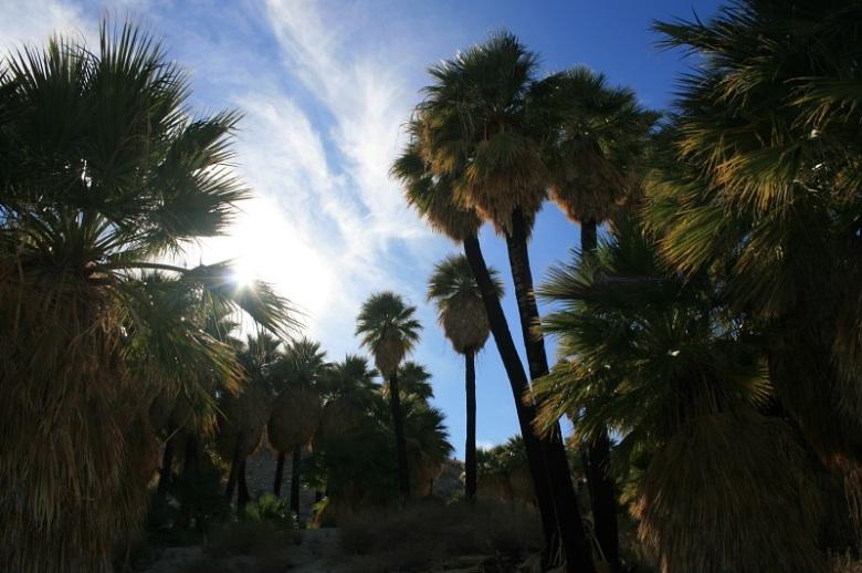 Southwet Palm Grove, Anza-Borrego Desert State Park