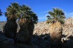Surprise Palms, Mountain Palm Springs, CA