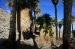 Southwest Grove, Mountain Palm Springs, CA