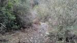 East Fork Trail, Santa Paula Canyon