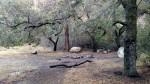 Big Cone Campground, Ventura County, CA