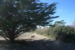 Tarpits Park, Carpinteria, CA