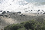 Carpinteria Bluffs Seal sanctuary