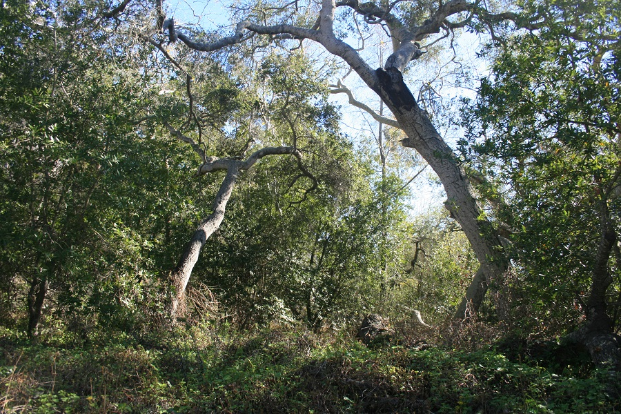 Sycamores, Ennisbrook Trail, Montecito, CA
