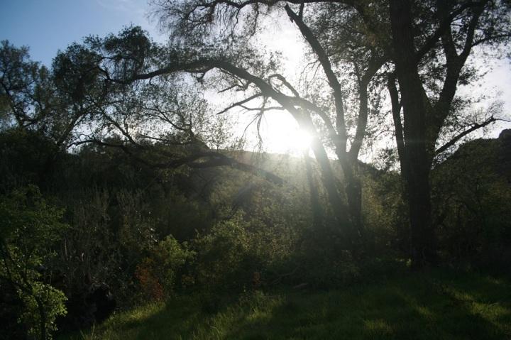 Luelf Pond Preserve, Ramona, CA