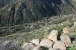 Climber's Trail, Mission Trails Regional Park, San Diego, CA
