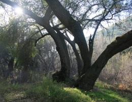 Sloan Canyon, San Diego County, CA