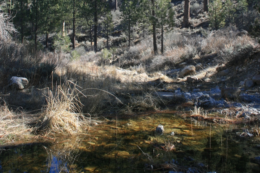 LIttle Rock Creek, Sulphur Springs Campground, Angeles National Forest, CA