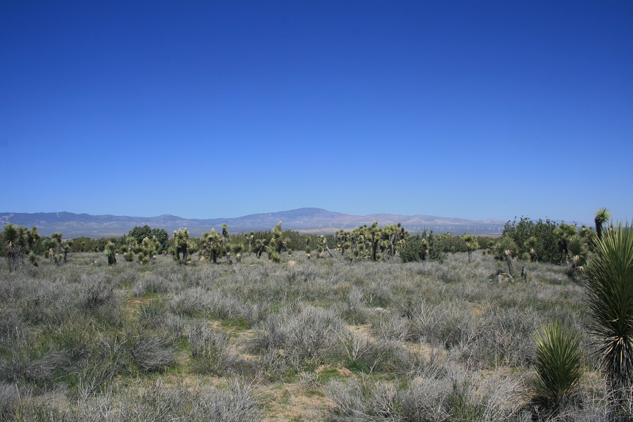 Panoramic view from Arthur B. Ripley Desert Woodland State Park, California