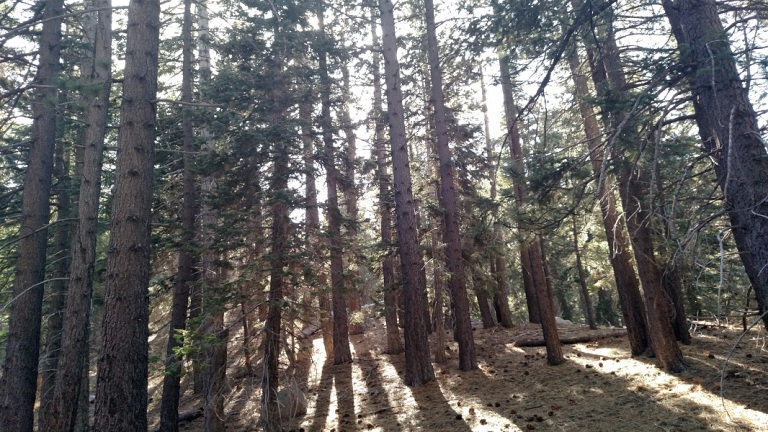 Plantation Trail, Big Bear Lake, CA