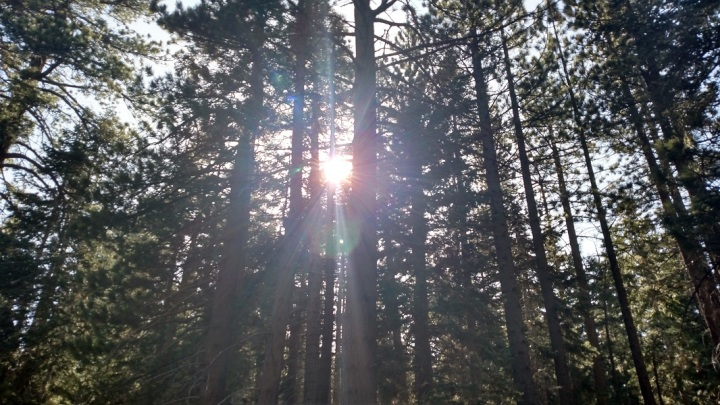 Plantation Trail, Big Bear Lake
