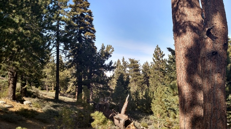 Plantation Trail, Big Bear Lake