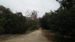 Lower Arroyo Seco Trail, Pasadena, CA