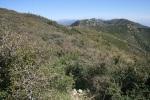 Chaparral on Cajon Mountain, San Bernardino, CA