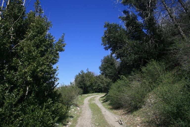 Cajon Fire Road, San Bernardino Mountains, CA