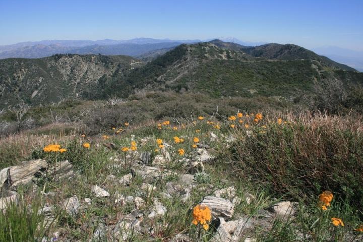 Cajon Mountain, San Bernardino, CA