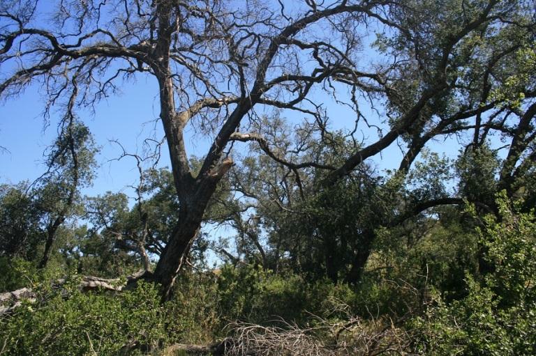 Oaks at Irvine Mesa, Orange County, CA
