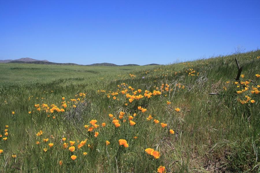 Rancho Potrero Open Space, Thousand Oaks, CA