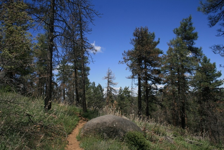 Wooded Hill Nature Trail, San Diego County, CA