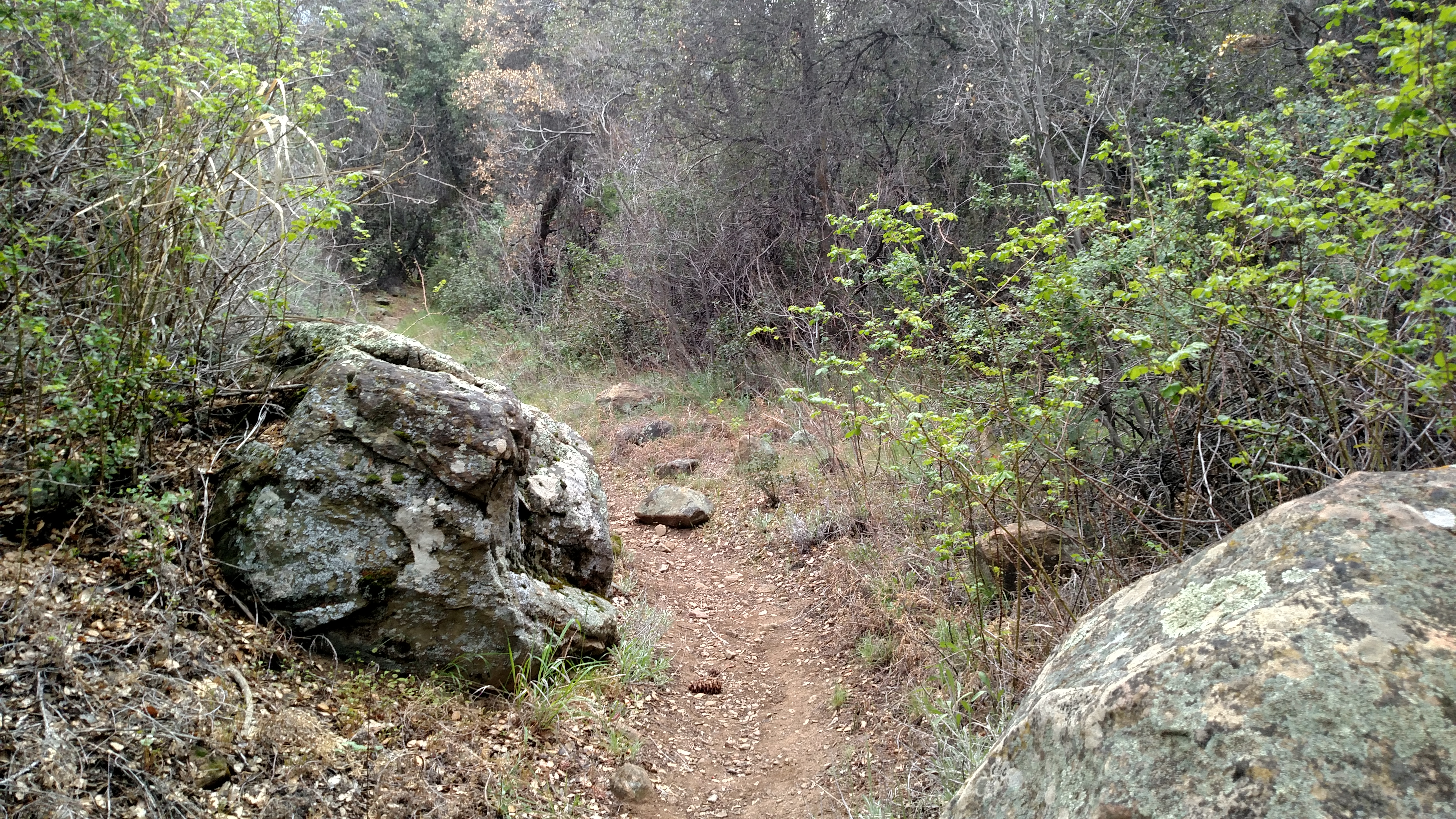 Upper Reyes Trail Camp via Gene Marshall Trail – Nobody