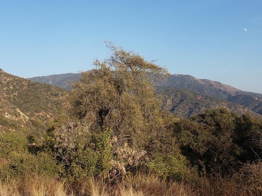 Hillside Wilderness Preserve, Monrovia