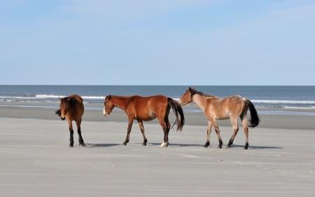 Image_1_cumberland_island_beach