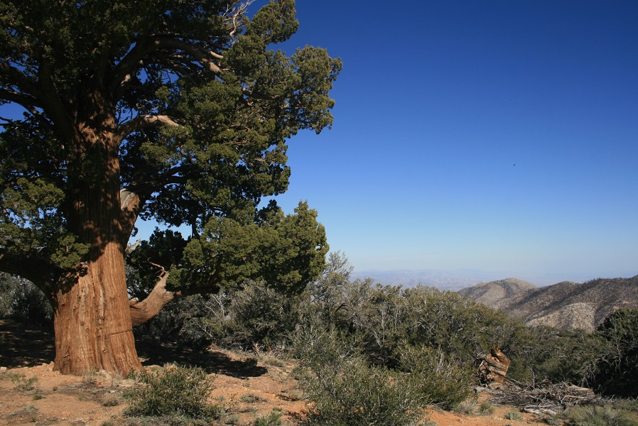 Southeast view from Onyx Peak, San Bernardino National Forest, CA