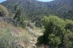 South Fork Trail, Idyllwild, CA
