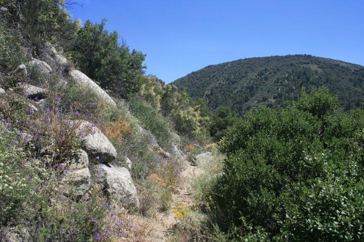 South Fork Trail, Idyllwild, CA