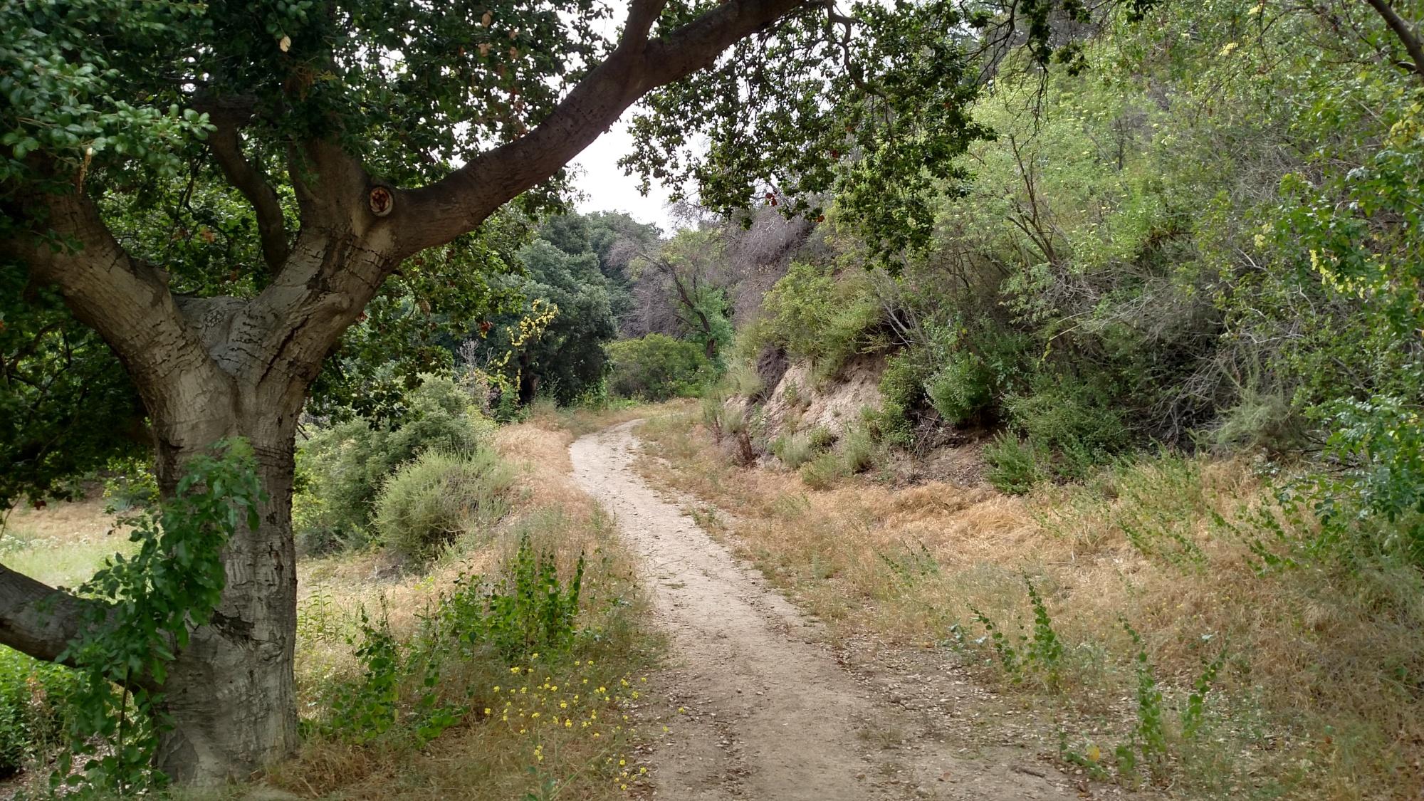 Cross Town Trail, La Canada Flintrdige, CA