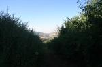 Azalea Glen Trail, Cuyamaca Rancho State Park, CA