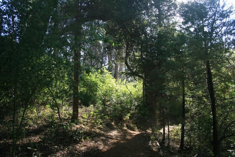 Azalea Glen Loop Trail, Cuyamaca Rancho State Park, San Diego County, CA