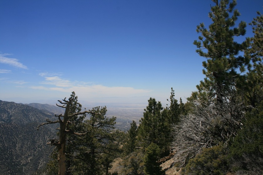 Mt. Lewis, Angeles National Forest, CA