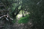 Miraleste Canyon Trail, Rancho Palos Verdes, CA