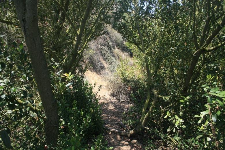 Miraleste Canyon, Rancho Palos Verdes, CA