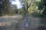 Pine Ridge Trail, Cuyamaca Rancho State Park, CA