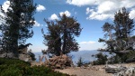 Limber Pine Bench Trail Camp, San Gorgonio Wilderness, CA