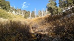 Limber Pine Spring, San Gorgonio Wilderness, CA