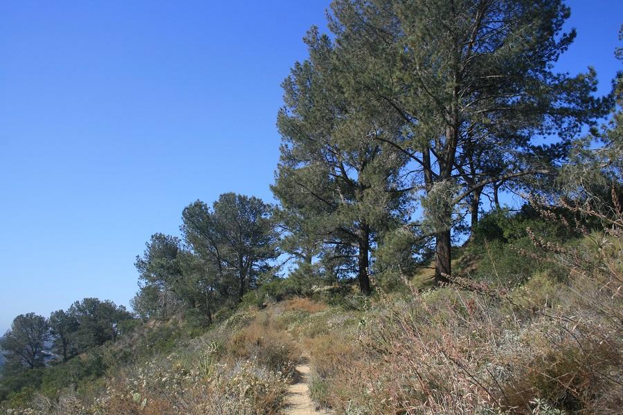 Torrey Pines at Torrey Pines Extension, San Diego, CA